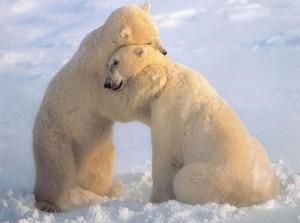 nothing like a bear hug